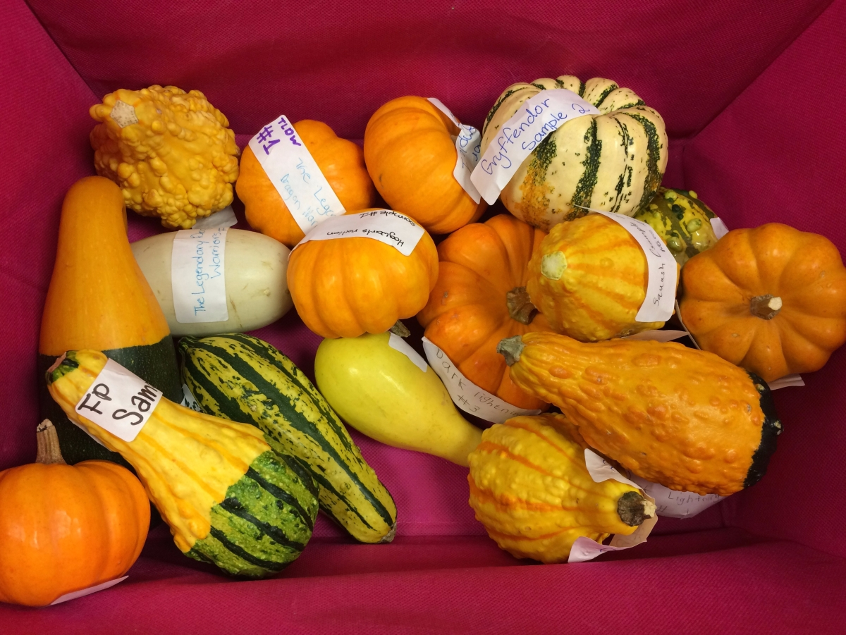 Lesson Plan: Oh My Gourd! Science Investigation